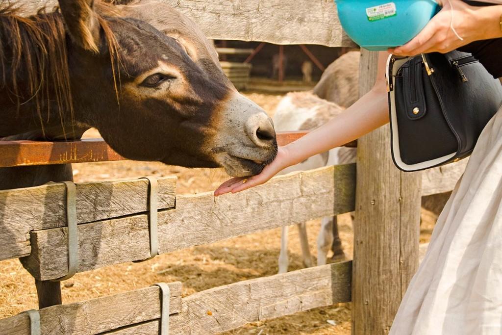 RetroCat füttert einen Esel auf der Ranch Dar Mar
