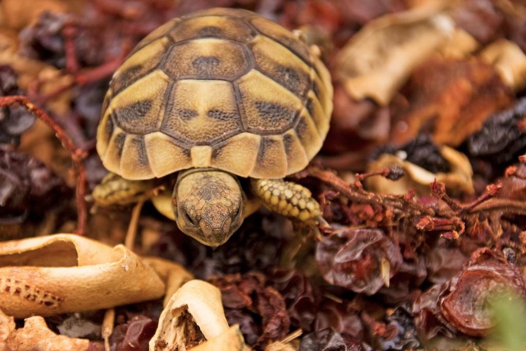 Eine Schildkröte in Kroatien