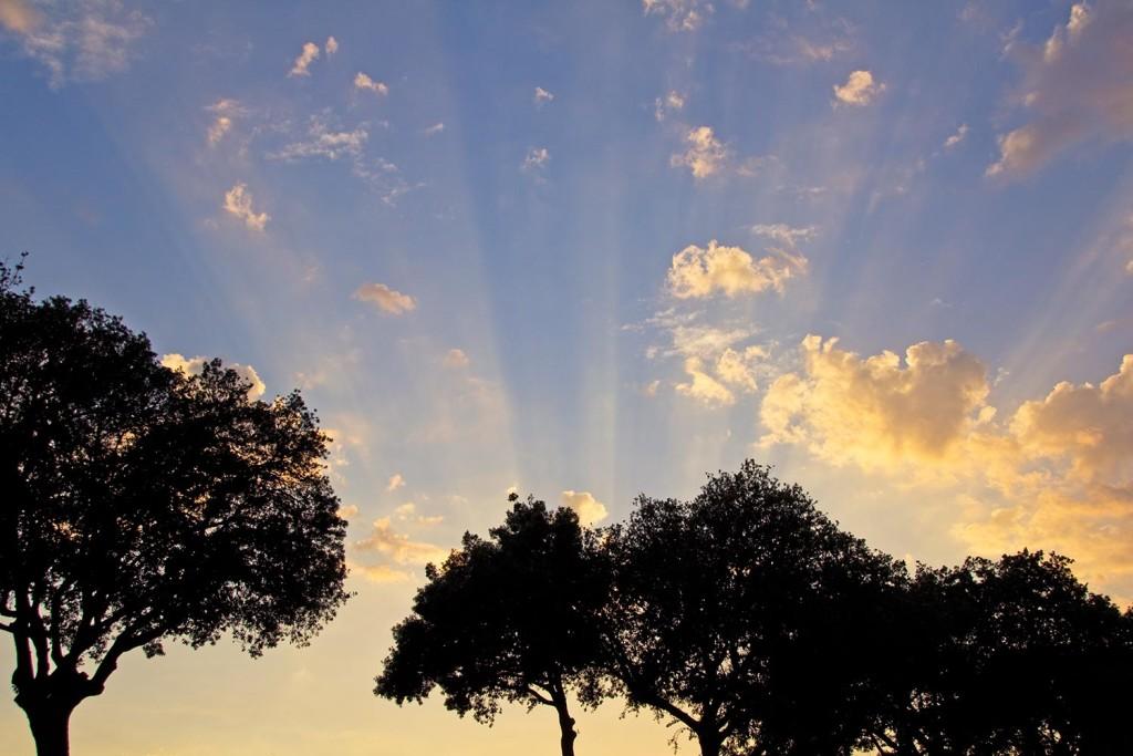 Sonnenstrahlen und Bäume im Vordergrund