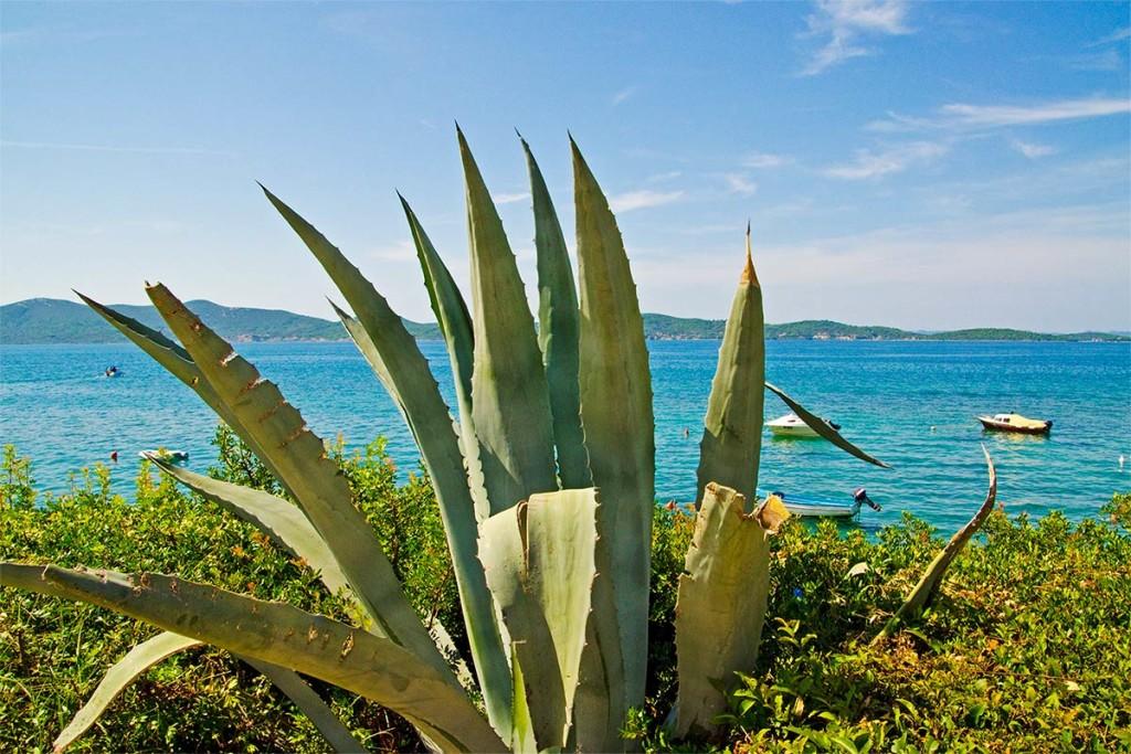 Ein Kaktus vor toller Kulisse in Kroatien