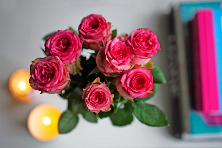 Pinke Rosen für die Wohnung