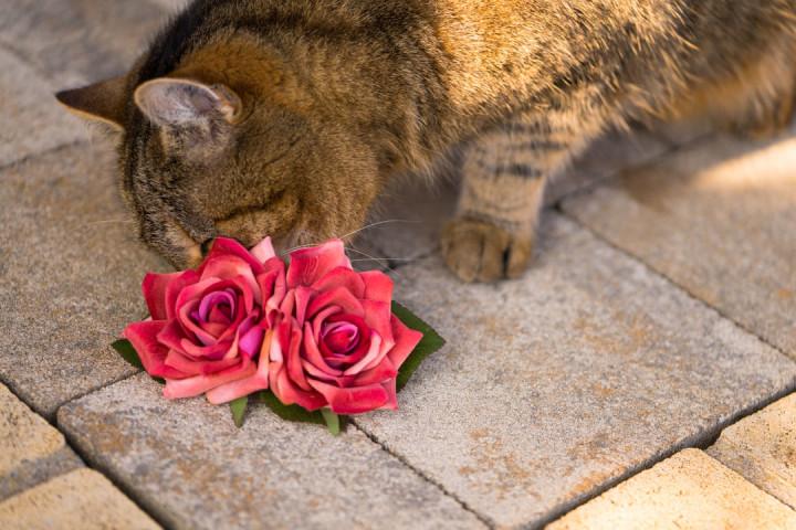 RetroCats Katze mit Haarblumen in Rosenform