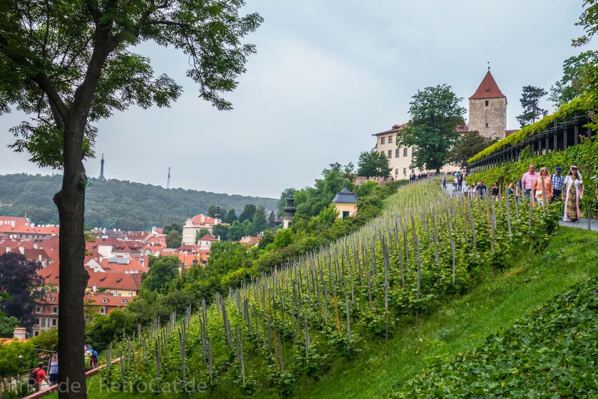 Ein Weingarten in Prag