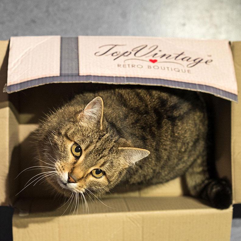 RetroCats Katze in einer Box