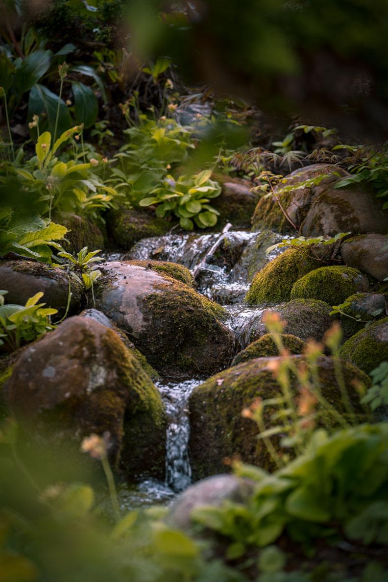 Ein kleiner Bach umgeben von Pflanzen auf der Insel Mainau
