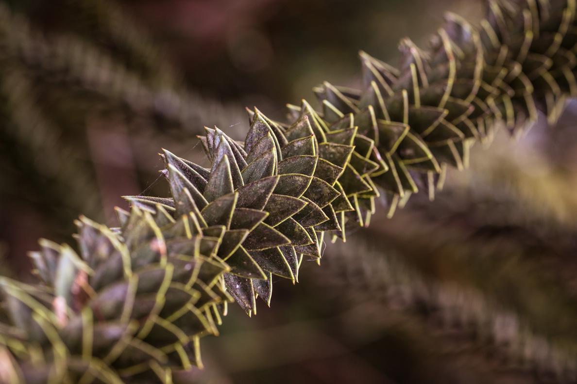 Eine Pflanze auf der Insel Mainau im Bodensee in der Detailansicht