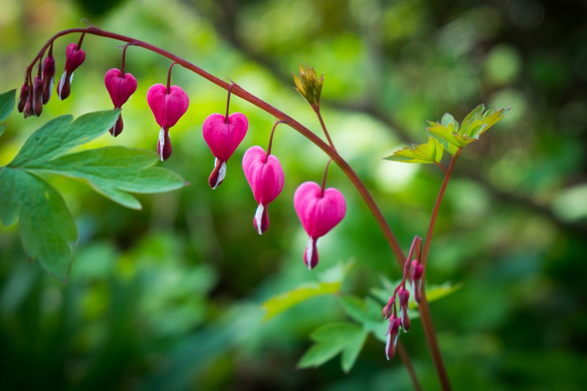 Blumen in Herzform auf der Blumeninsel Mainau