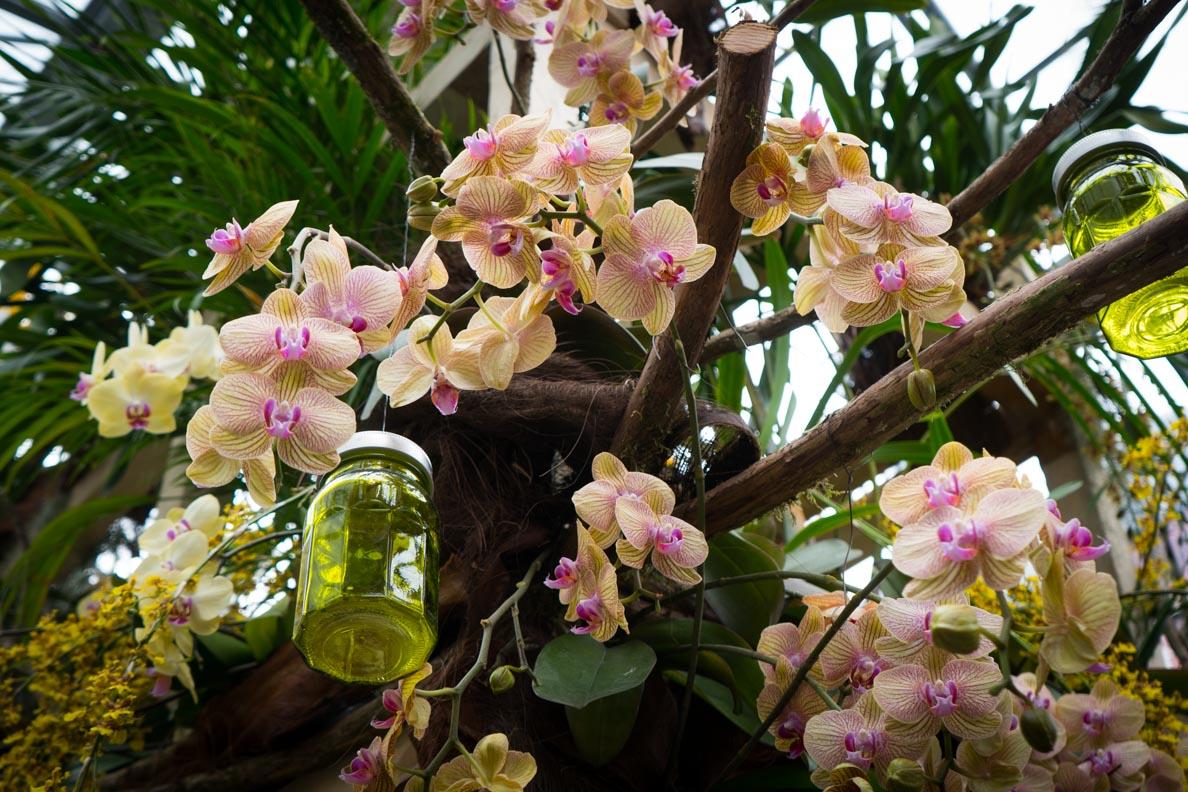 Die Orchideenschau im Palmenhaus der Blumeninsel Mainau