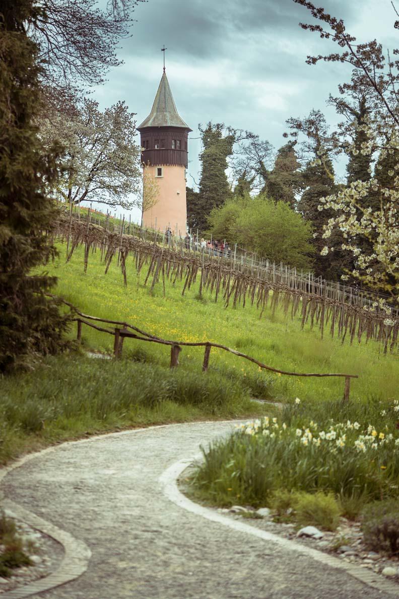 Ein Weinberg auf der Blumeninsel Mainau