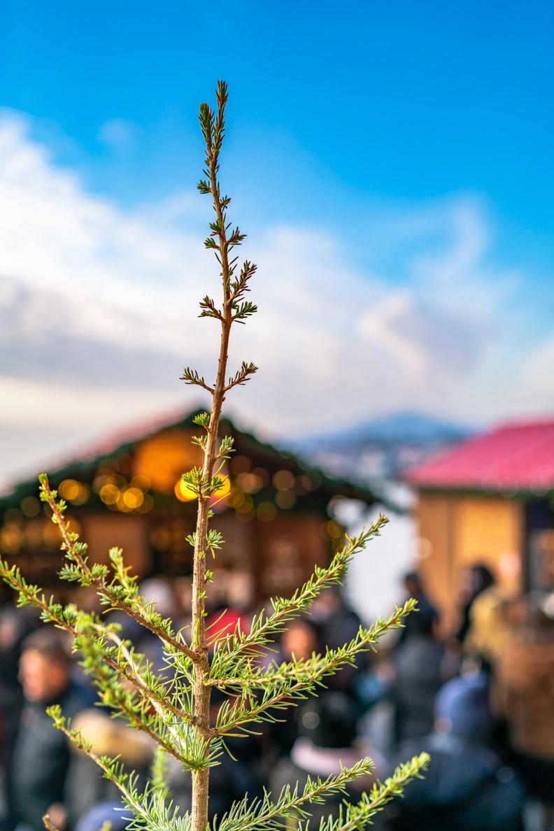 Ein Tannenbaum auf dem Weihnachtsmarkt in Montreux