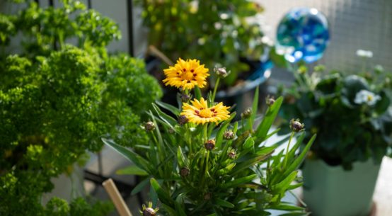 Bienenfreundlicher Balkon: Mit diesen einfachen Tipps wird Dein Balkon insektenfreundlich & wunderschön