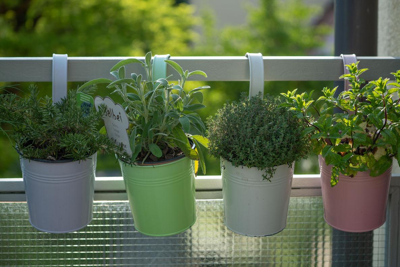 Bienenfreundlicher Balkon: Leckere Küchenkräuter in bunten Töpfen