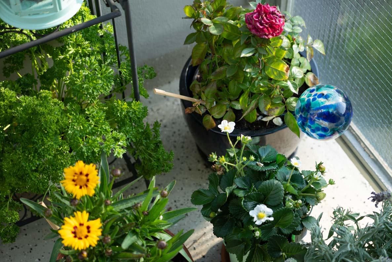 Bienenfreundliche Blumen und Pflanzen auf dem Balkon