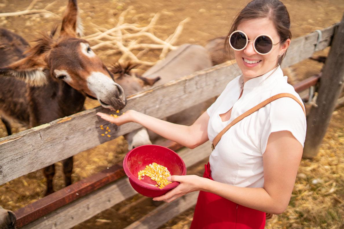 RetroCat mit runder Retro-Sonnenbrille, heller Bluse und rotem Rock auf einer Eselsfarm in Kroatien
