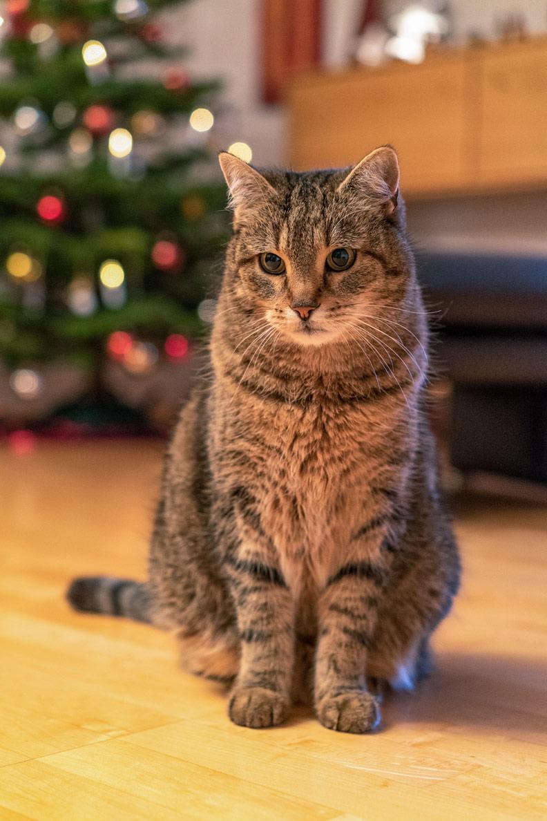 Was wir von Katzen lernen können: Alleinsein kann auch schön sein