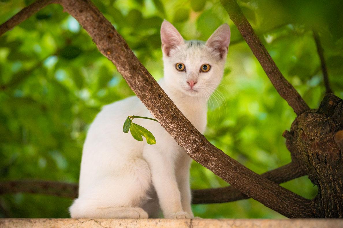 Eine neugierig dreinblickende Katze unter einem Baum