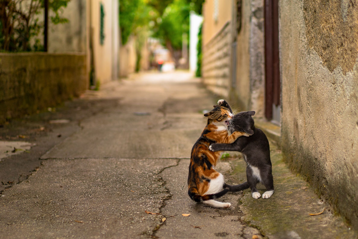 Zwei spielende Katzen in einer Gasse