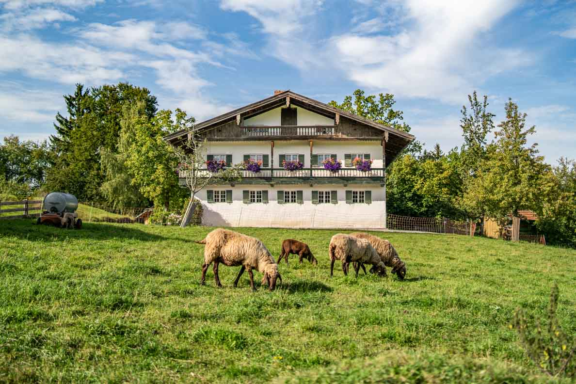 Eine Schafweide vor einem alten Bauernhaus im Freilichtmuseum Glentleiten in Oberbayern