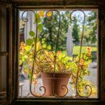 Eine Topfpflanze vor einem historischen Fenster in einem alten Bauernhaus