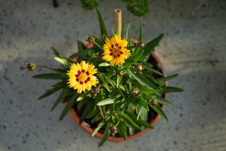 RetroCats Blumen auf ihrem Balkon