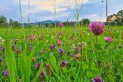 RetroCats Wochenrückblick Nr. 8: Müßiggang & viel Natur