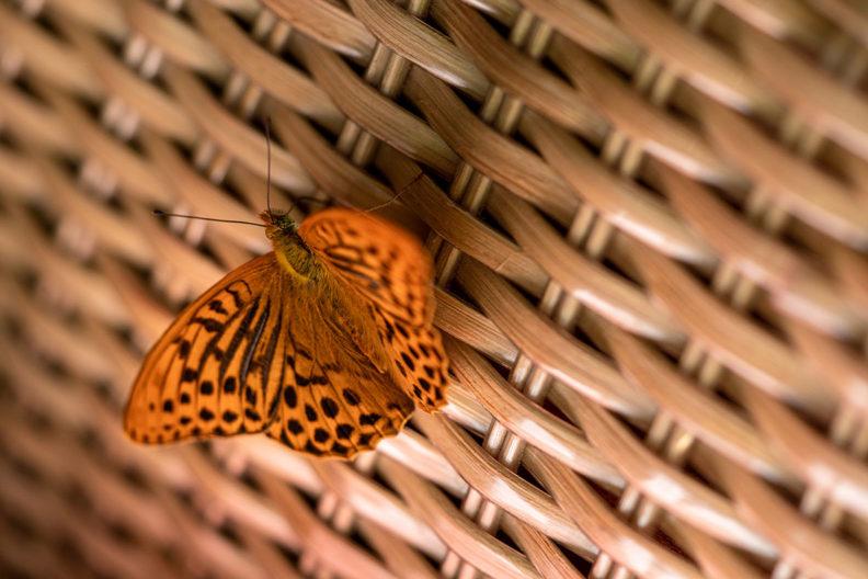 Ein Schmetterling auf RetroCats Korbtasche