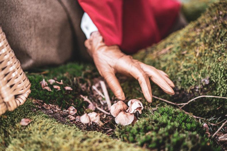 RetroCat mit Vintage-Leder-Handschuhen beim Pilze-Pflücken