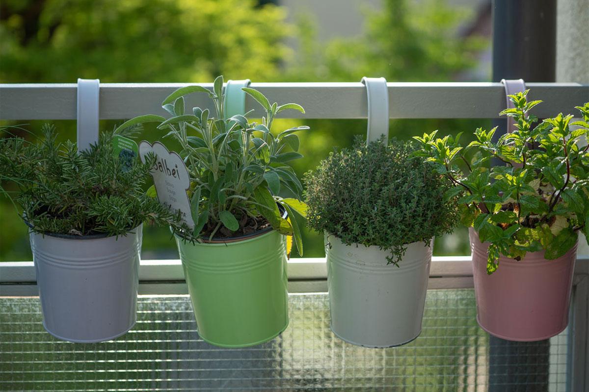 Urlaub zu Hause: Balkon bepflanzen - so gelingt der Start