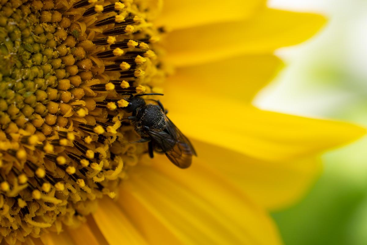 Bienenfreundlicher Balkon: Mit diesen Tipps wird Dein Balkon insektenfreundlich & wunderschön