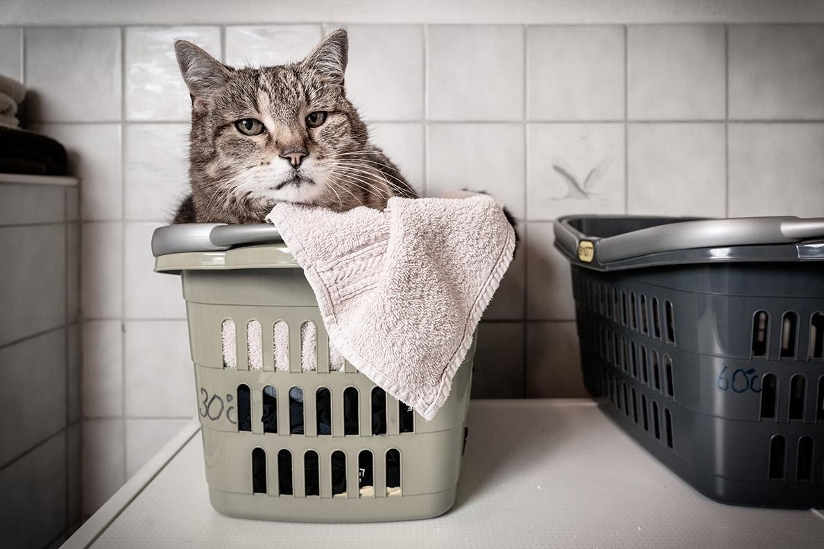 RetroCats Katze im Wäschekorb auf einem Handtuch